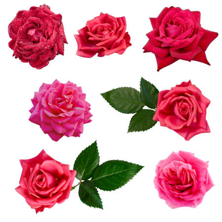 collage of eight red roses isolated on white background