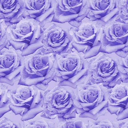 Plenty natural roses seamless background. Toned roses endless pattern. photo