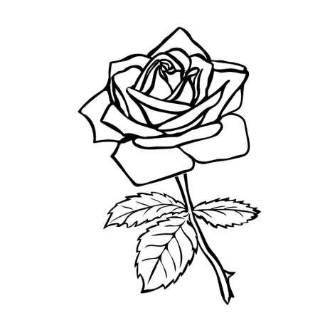 Rose boceto. Contorno negro sobre fondo blanco. Ilustración del vector. Foto de archivo - 36888396