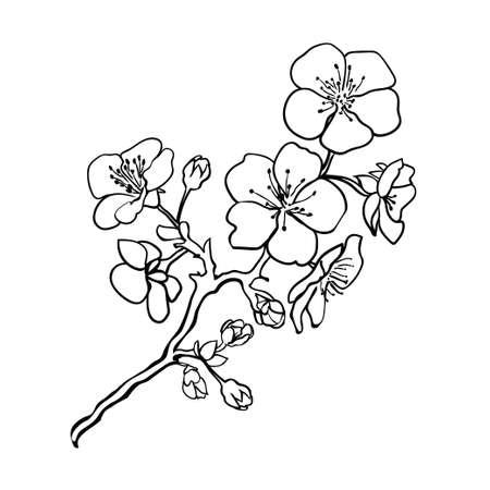 Sketch. Ramita flores de sakura. Ilustración vectorial Foto de archivo - 37749304