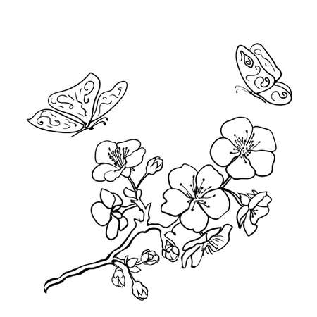 papillon dessin: Sketch. Brindille fleurs sakura. Vector illustration