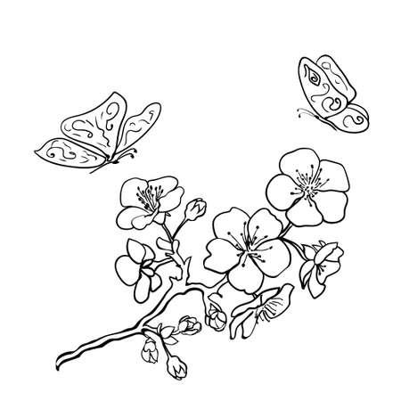 Sketch. Twig sakura blossoms . Vector illustration Vectores