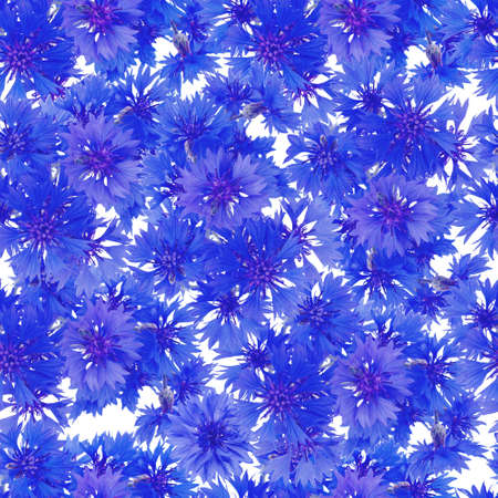 seamless pattern. bouquet of cornflowers photo