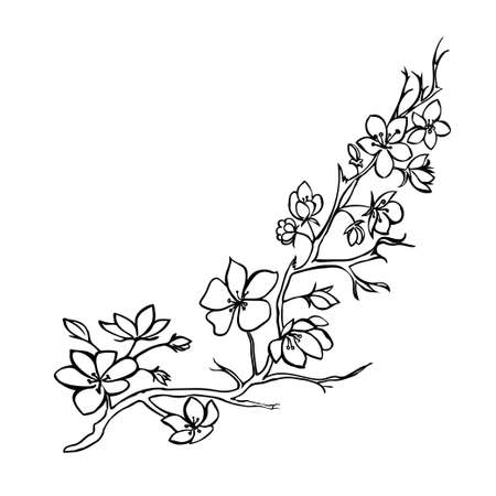 black and white image drawing: Sketch. Twig sakura blossoms . Vector illustration Illustration