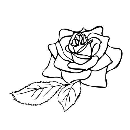jednolitego: Rose szkic. Czarny zarys na białym tle. Ilustracji wektorowych.