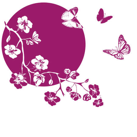 pink cherry blossoms branch and butterflies are on white background. Vector illustration Vectores