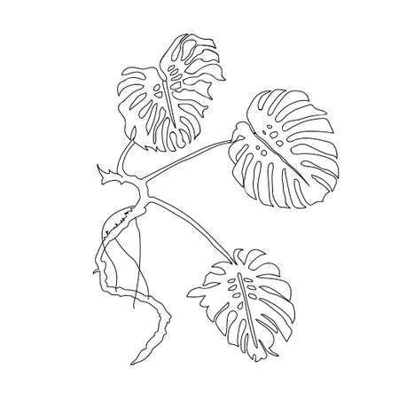 Monstera Leaves. Vector Illustration.  black outline. Plant leaves. Nature theme. Vector