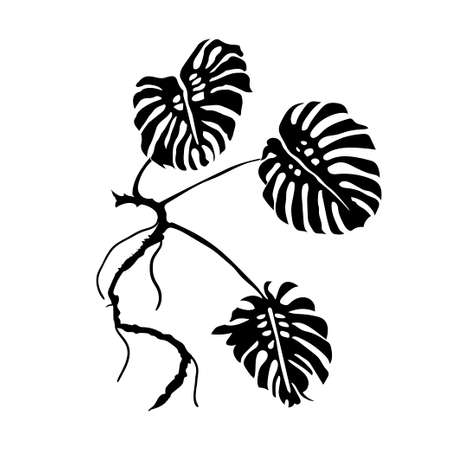 monstera: Monstera Leaves. Vector Illustration.  black outline. Plant leaves. Nature theme.