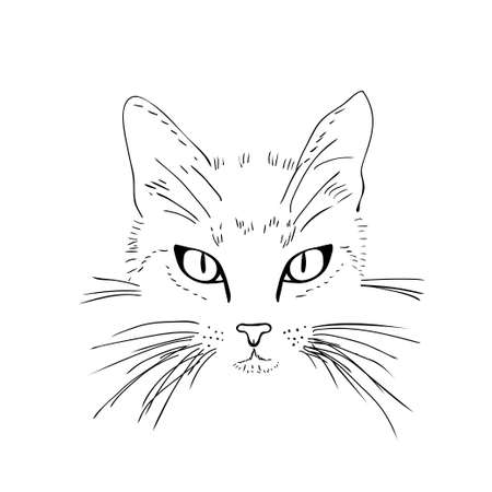 line drawings: Cat  face. Black and white sketch. Vector illustration