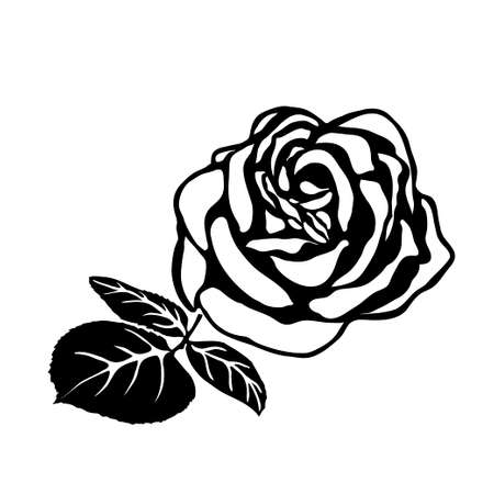pedicle: silhouette of rose