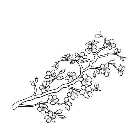 black branch: twig sakura blossoms. Vector illustration. Black outline