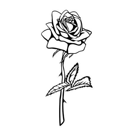dessin noir et blanc: Rose croquis. Contour noir sur fond blanc. Vector illustration.