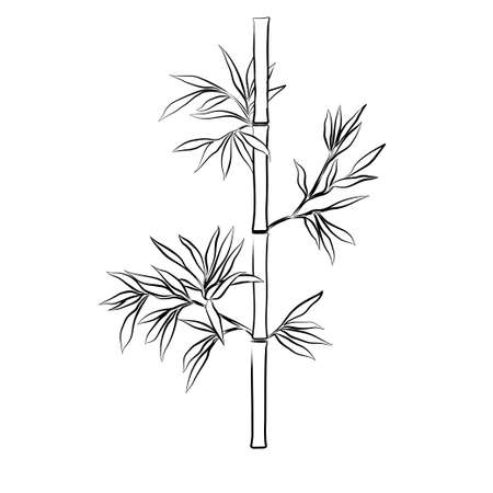 treelike: Bamboo branches isolated on the white background. Sketch.