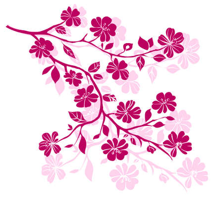 cherry blossom tree: pink cherry blossoms branch  are on white background. Vector illustration