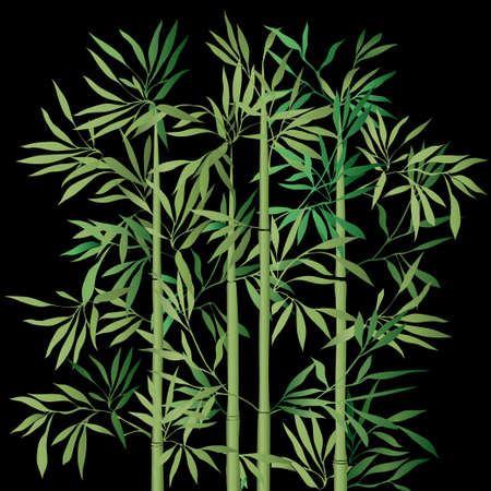 bamboo leaves: The top of the bamboo. Green bamboo with leaves on black background. Vector illustration