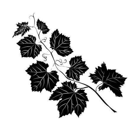 Grape Leaves baroque plants. Black contour on white background.  Vector illustration.