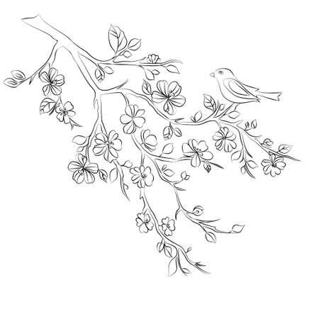 black branch: twig sakura blossoms and bird. Vector illustration. Black outline