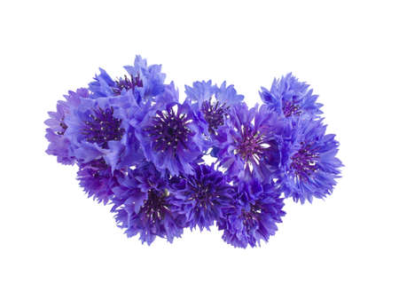 cornflowers: bouquet of cornflowers isolated on white background Stock Photo