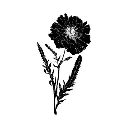 herbology: poppy silhouettes isolated on white background. Vector illustration