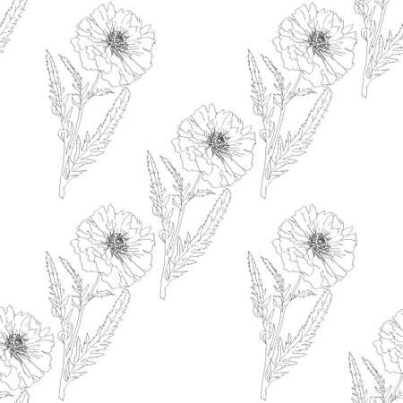 opium poppy: poppy isolated on white background. Vector illustration. Floral seamless texture. Illustration
