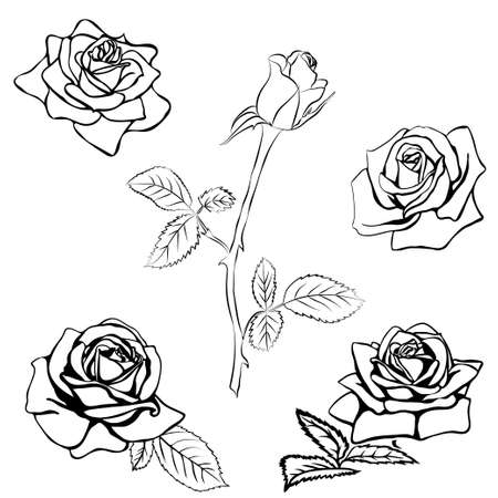 thorns and roses: Set Rose sketch. Black outline on white background. Vector illustration.