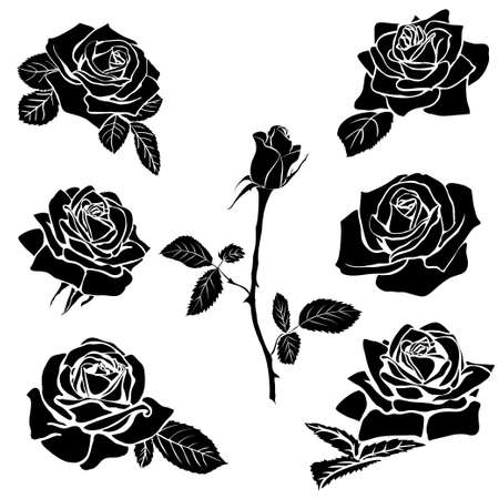 abstract rose: silhouette of rose isolated on white background. Vector illustration.