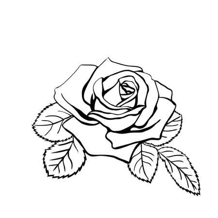 rosas negras: Rose boceto. Contorno negro sobre fondo blanco. Ilustración del vector.