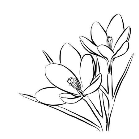 Hand drawn crocus flowers. Elegant vintage card. Vector illustration. Illustration