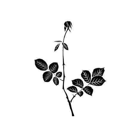 withering: Black silhouette of withering rose isolated on white background. Vector illustration. Illustration