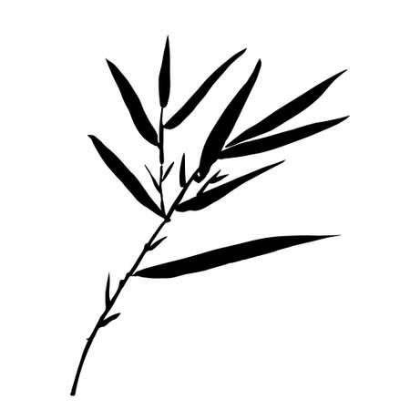 bamboo leaf: The top of the bamboo. Bamboo leaf background.  Vector illustration