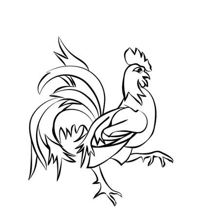 morning  cock: Black sketch drawing of an cock is on white background
