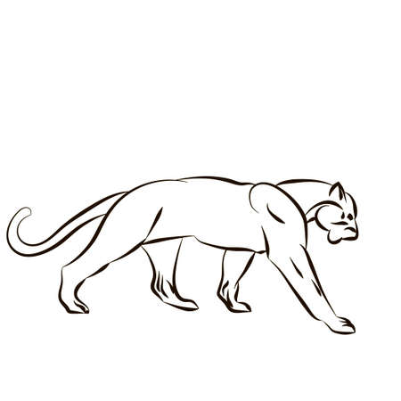 Vector illustration with tiger silhouette isolated on white background