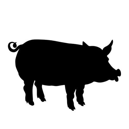 flu vaccination: Black  silhouette of pig is on white background. Vector illustration.