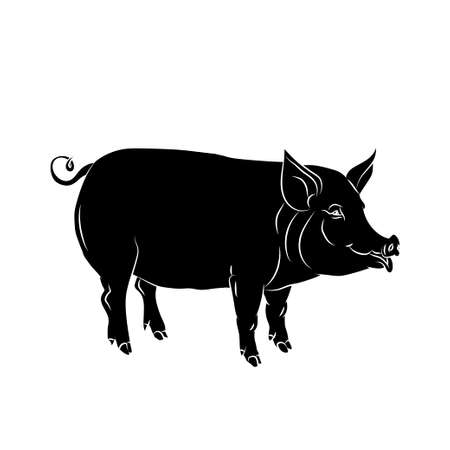 sniff: Black  silhouette of pig is on white background. Vector illustration.