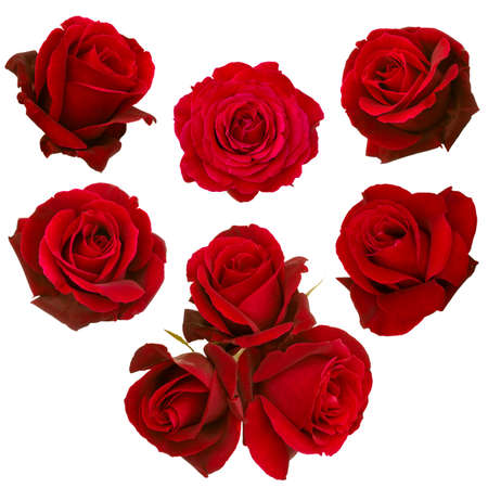 collage of red roses isolated on white background Stock Photo