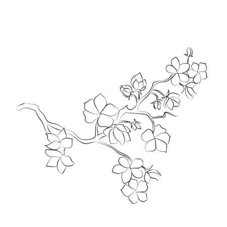 black cherry tree: twig sakura blossoms. Vector illustration. Black outline