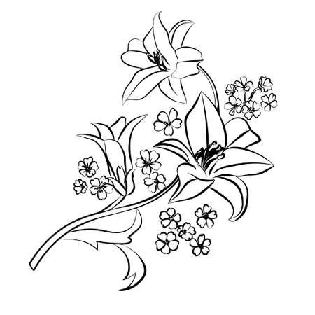Lily sketch. Black outline on white background. Vector illustration.