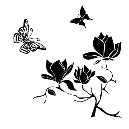 Flowering Branch of Magnolia on white background . Hand drawn vector illustration, sketch. Elements for design. Illustration