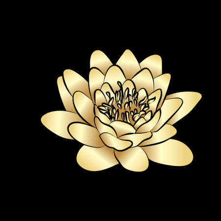 an inflorescence: Golden silhouette of lotus flowers icon on black background. Vector illustration Illustration