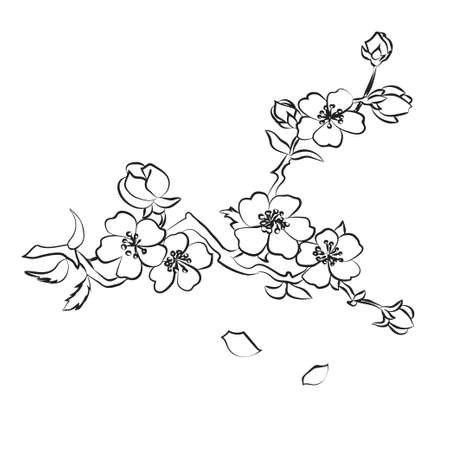 black: twig sakura blossoms. Vector illustration. Black outline