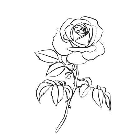 Rose sketch. Black outline on white background. Vector illustration.