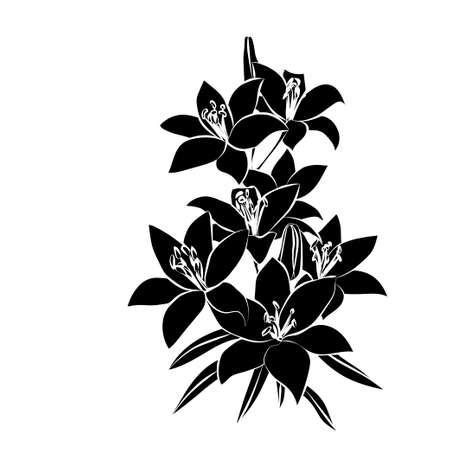 Silhouette Lily. Black outline on white background. illustration. Vector Illustration