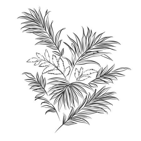 black outline: Palm leaves. Black outline on white background. illustration