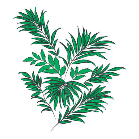 cycas: Palm leaves. Green silhouette on white background