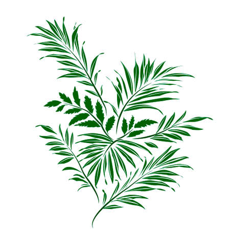coconut palm tree: Palm leaves. Green silhouette on white background