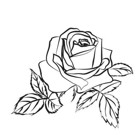 Rose schets. Zwarte schets op witte achtergrond. Vector illustratie.
