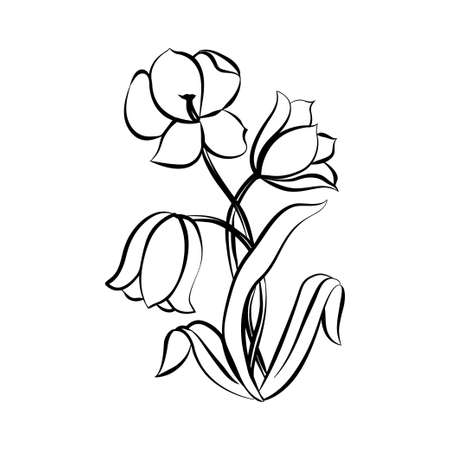 white blossom: Flower tulip. Black outline on white background, vector illustration