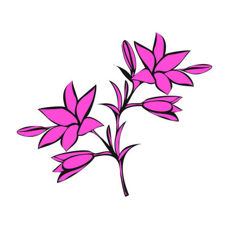 pink lily: Pink Lily on white background Illustration
