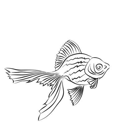 aquaculture: Goldfish - linear pattern. Vector image on white background.