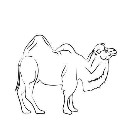 Camel is herbivorous enduring mammal with hump on its back with reserve of fat.